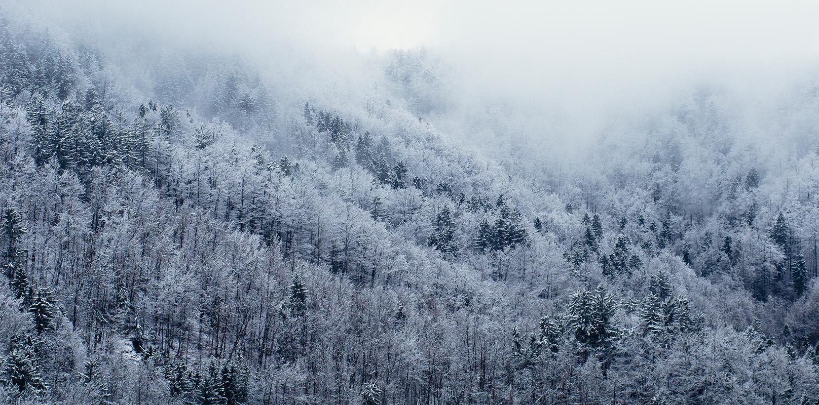 Oeffnungszeiten zwischen den Jahren Winter Wald